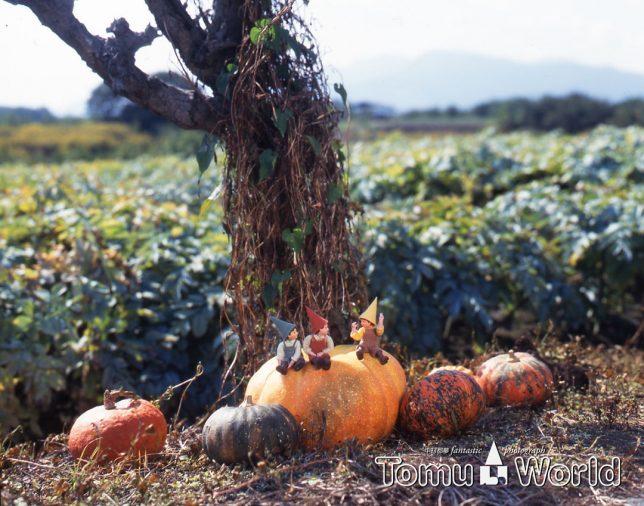 かぼちゃ畑で一休み