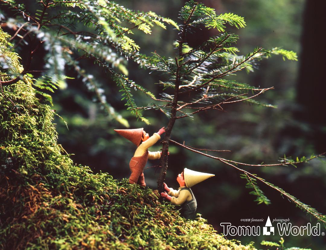 森の中 杉の若木を世話する小人たち